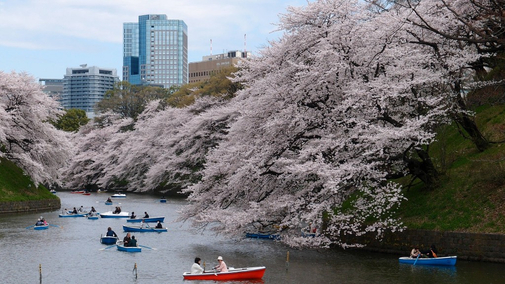 Boaters drift among the cherry blossoms in Tokyo, Japan.